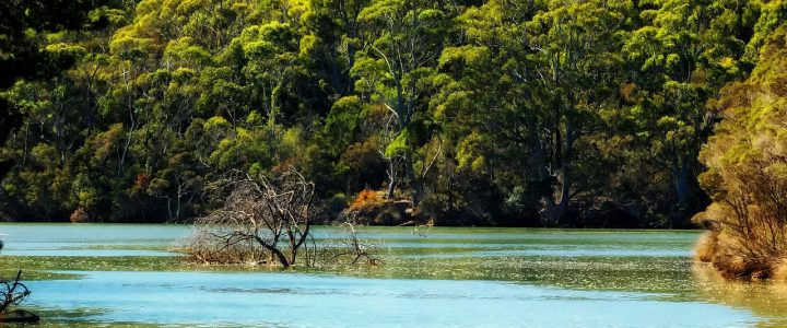 Cardwell – A Beautiful Spot to enjoy holiday